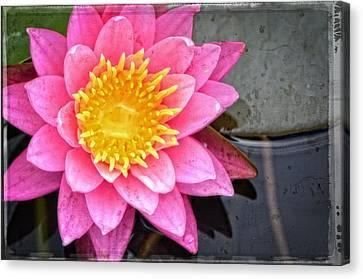 Pink Lotus Flower - Zen Art By Sharon Cummings Canvas Print by Sharon Cummings