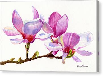 Pink Magnolia Blossoms On A Branch Canvas Print by Sharon Freeman