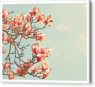 Pink Magnolia Flowers Against Blue Sky Canvas Print by Brooke T Ryan