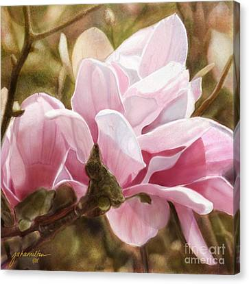 Pink Magnolia One Canvas Print by Joan A Hamilton