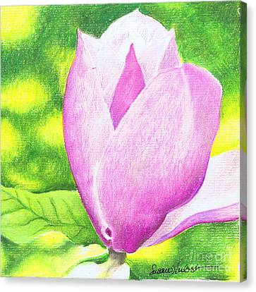 Canvas Print featuring the painting Pink Magnolia by Susan Herbst
