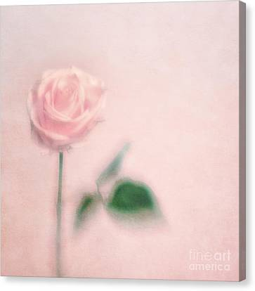 pink moments II Canvas Print by Priska Wettstein