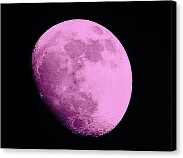 Pink Moon Canvas Print by Tom Gari Gallery-Three-Photography