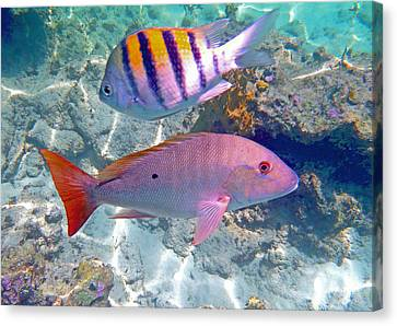 Parrot Fish Canvas Print - Pink Mutton by Carey Chen