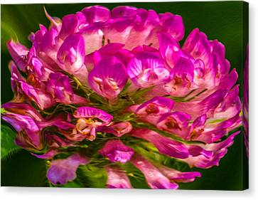 Pink Mystery Flower Canvas Print by Omaste Witkowski