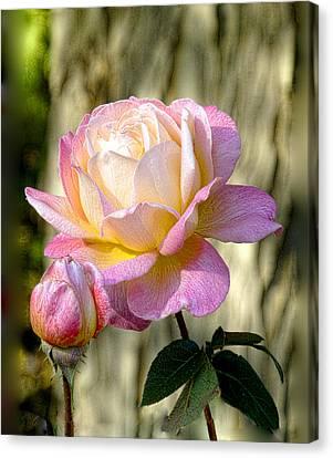 Pink October Rose Canvas Print