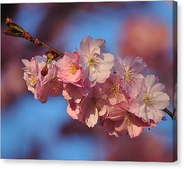 Canvas Print featuring the photograph Pink On Bleu by Paul Noble