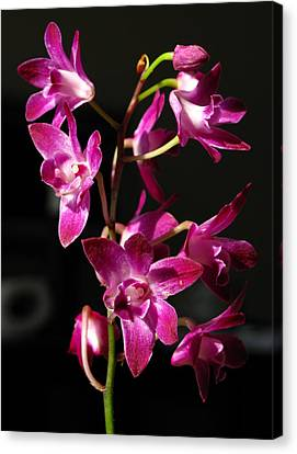 Pink Orchid Canvas Print by Eva Csilla Horvath