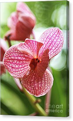 Pink Orchid I Canvas Print
