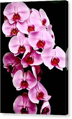Pink Orchid Canvas Print by Menachem Ganon