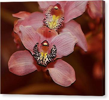 Pink Orchid Canvas Print by Mustafa Abdullah