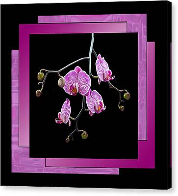 Canvas Print featuring the photograph Framed Orchid Spray by Patti Deters