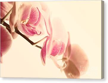 Pink Orchids On Soft Pink Background Canvas Print by Sabine Jacobs