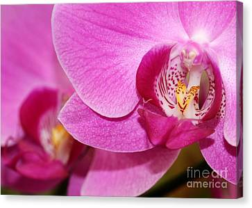Pink Orchids Canvas Print by Sabrina L Ryan
