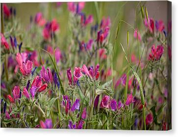 Canvas Print featuring the photograph Pink Outburst by Uri Baruch