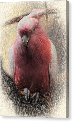 Pink Painted Parrot Canvas Print by Terry Cork