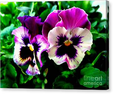Violet Pansies Canvas Print