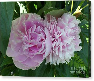 Pink Peonies 2 Canvas Print by HEVi FineArt