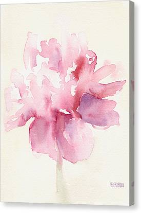 White Flower Canvas Print - Pink Peony Watercolor Paintings Of Flowers by Beverly Brown Prints