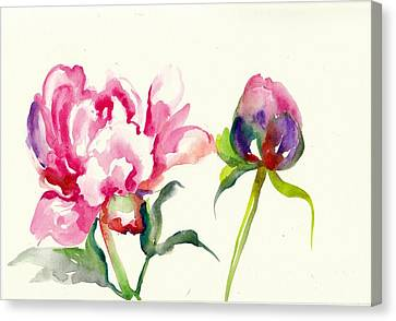 Pink Peony With Bud And Leaf Watercolor Canvas Print by Tiberiu Soos