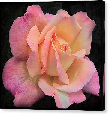 Canvas Print featuring the photograph Pink Petals by Kim Andelkovic
