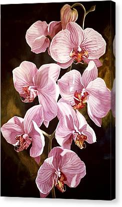 Pink Phalaenopiss Orchids Canvas Print