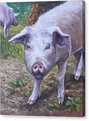 Pink Pig Portrait Canvas Print by Martin Davey