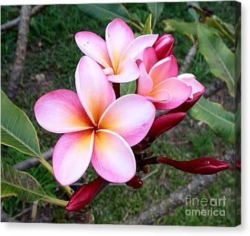 Pink Plumeria Canvas Print by Mindy Sue Werth