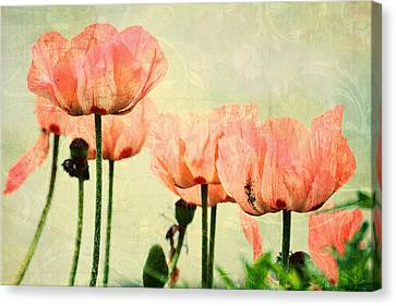 Canvas Print featuring the photograph Pink Poppies In The Garden by Peggy Collins