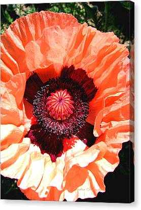 Canvas Print featuring the photograph Peach Poppy Perfection by Brooks Garten Hauschild