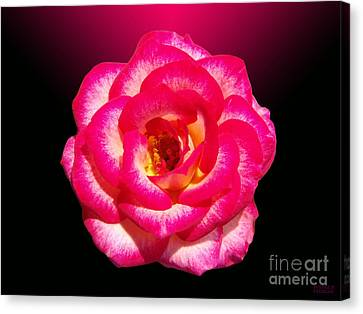 Canvas Print featuring the photograph Pink Queen  by Hanza Turgul
