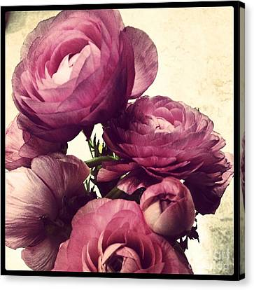 Pink  Ranunculus Canvas Print by Heather L Wright