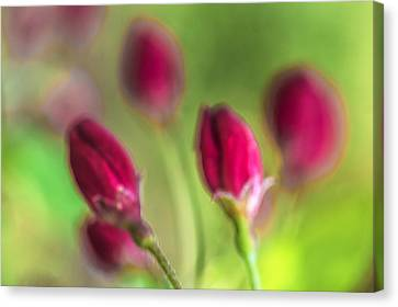 Pink Red Buds Canvas Print by Arkady Kunysz