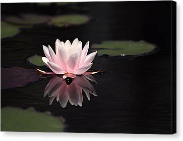 Pink Reflection Canvas Print by Katherine White