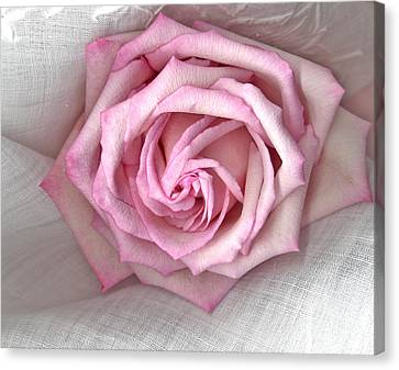 Pink Rose And Linen Canvas Print by Sandra Foster