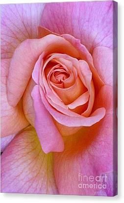 Pink Rose Closeup II Canvas Print