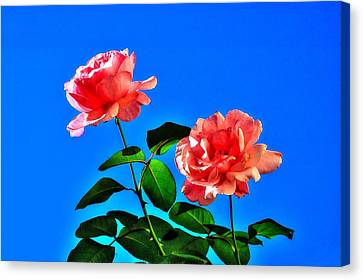 Canvas Print featuring the photograph Pink Rose by Ed Roberts
