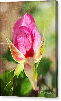 Pink Rose Canvas Print by Judy Palkimas