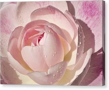 Pink Rose Canvas Print by Mariola Szeliga