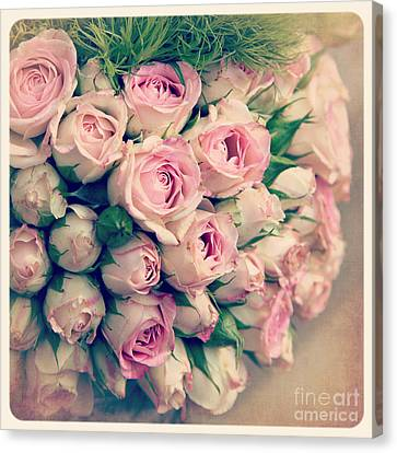 Pink Rosebuds Old Photo Canvas Print
