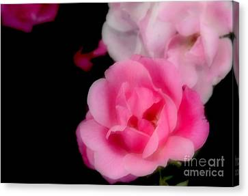 Pink Roses Canvas Print by Kathleen Struckle