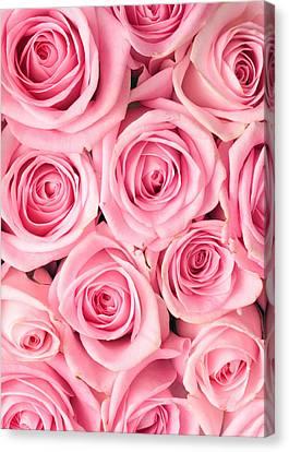 Pink Roses Canvas Print by Munir Alawi