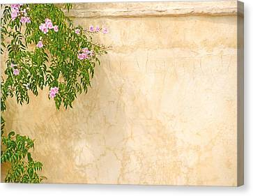 Pink Roses On A Wall Canvas Print by Gry Thunes