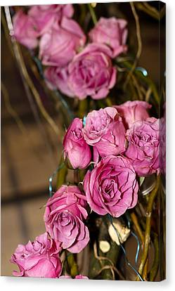 Pink Roses Canvas Print by Patrice Zinck