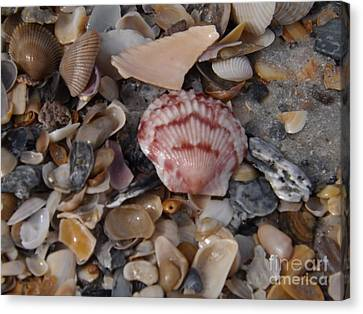 Pink Shell Canvas Print by Brigitte Emme
