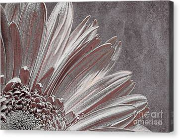 Pink Silver Canvas Print by Lois Bryan
