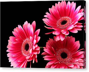 Pink Sisters Canvas Print by Eden Baed