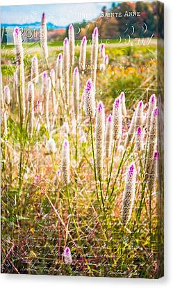 Pink Spiky Flowers With French Handwriting Canvas Print by Karen Stephenson