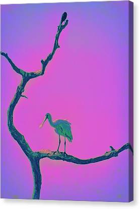 Pink Spoonbill Canvas Print by David Mckinney