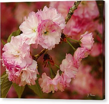 Pink Spring Blossoms Canvas Print by James C Thomas